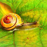 Snail Farm – Opiniones, funciona, efectos
