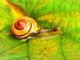 Snail Farm Opiniones